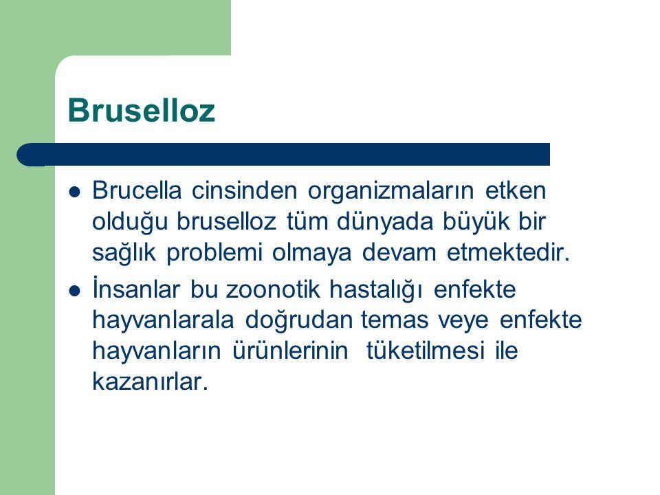 Bruselloz Brucella cinsinden organizmaların etken olduğu bruselloz tüm dünyada büyük bir sağlık problemi olmaya devam etmektedir.