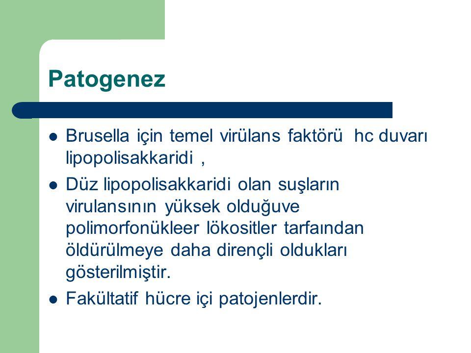 Patogenez Brusella için temel virülans faktörü hc duvarı lipopolisakkaridi ,