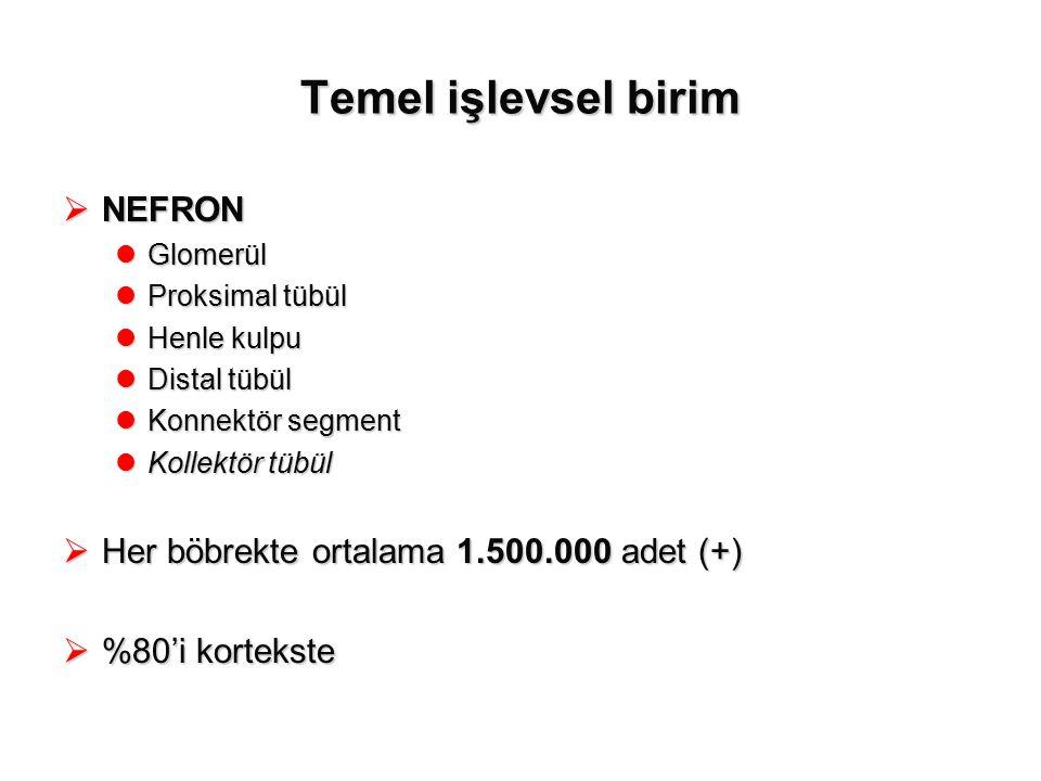 Temel işlevsel birim NEFRON Her böbrekte ortalama 1.500.000 adet (+)