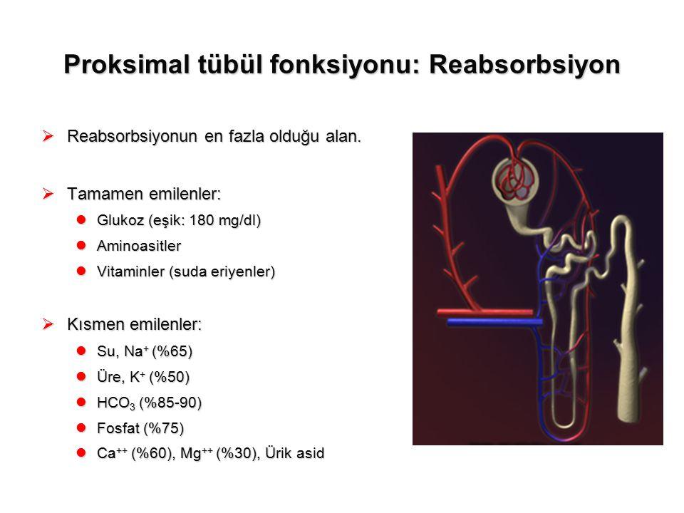 Proksimal tübül fonksiyonu: Reabsorbsiyon