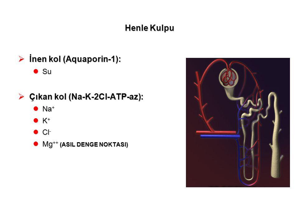İnen kol (Aquaporin-1):