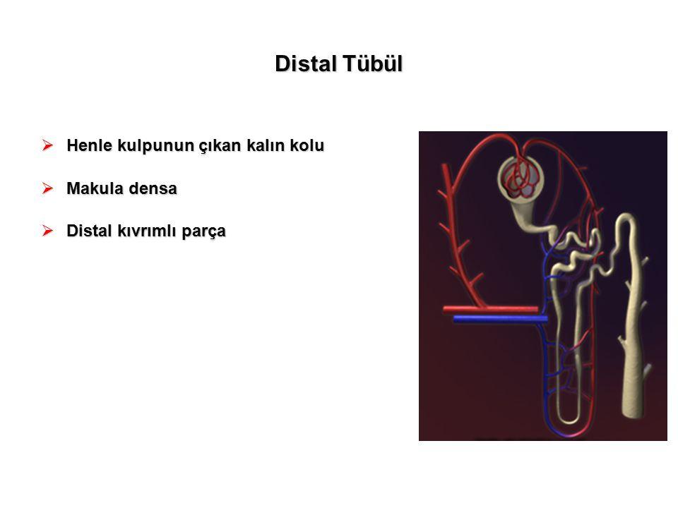 Distal Tübül Henle kulpunun çıkan kalın kolu Makula densa