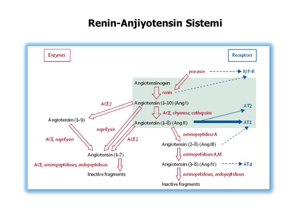 Renin-Anjiyotensin Sistemi
