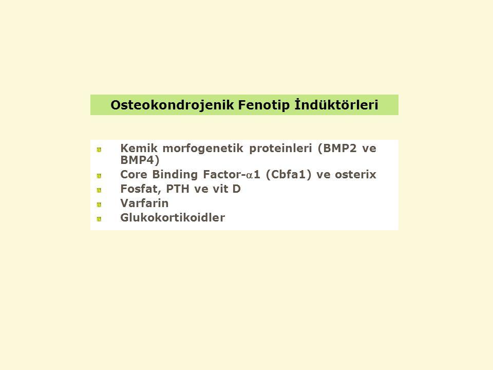Osteokondrojenik Fenotip İndüktörleri