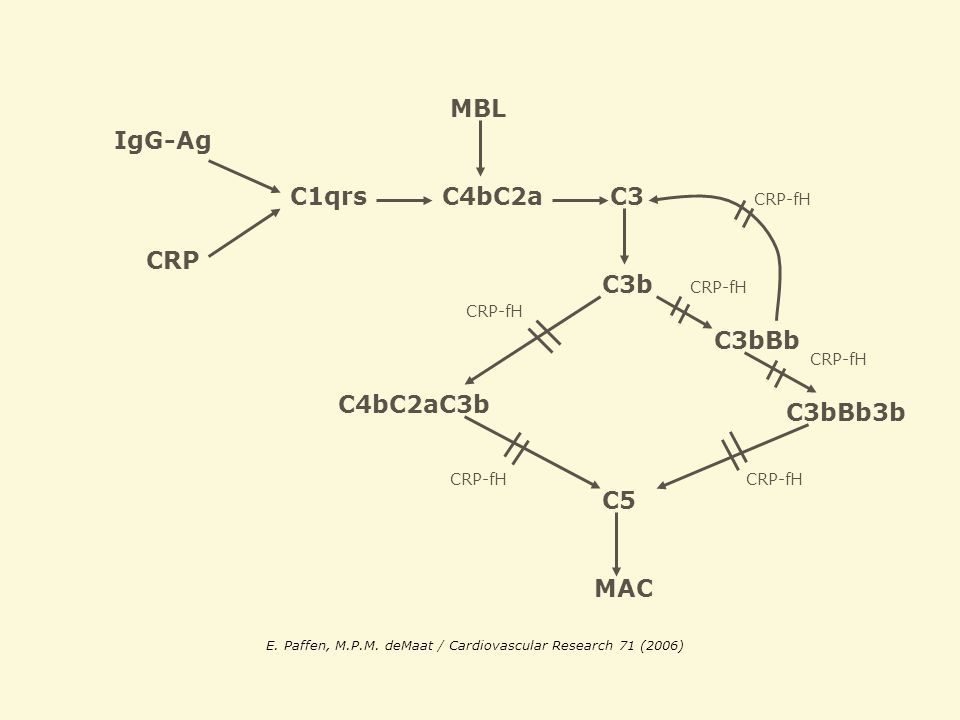 MBL IgG-Ag C1qrs C4bC2a C3 CRP C3b C3bBb C4bC2aC3b C3bBb3b C5 MAC