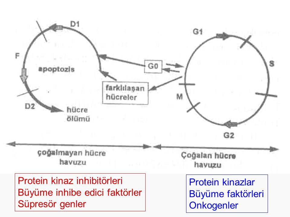 Protein kinaz inhibitörleri