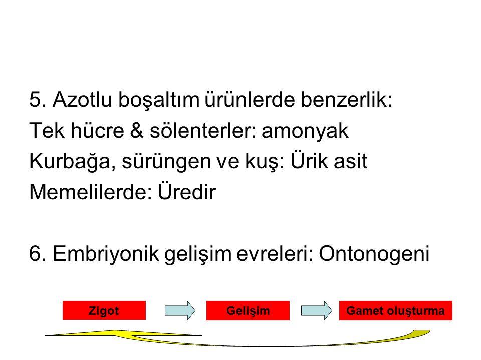 5. Azotlu boşaltım ürünlerde benzerlik: