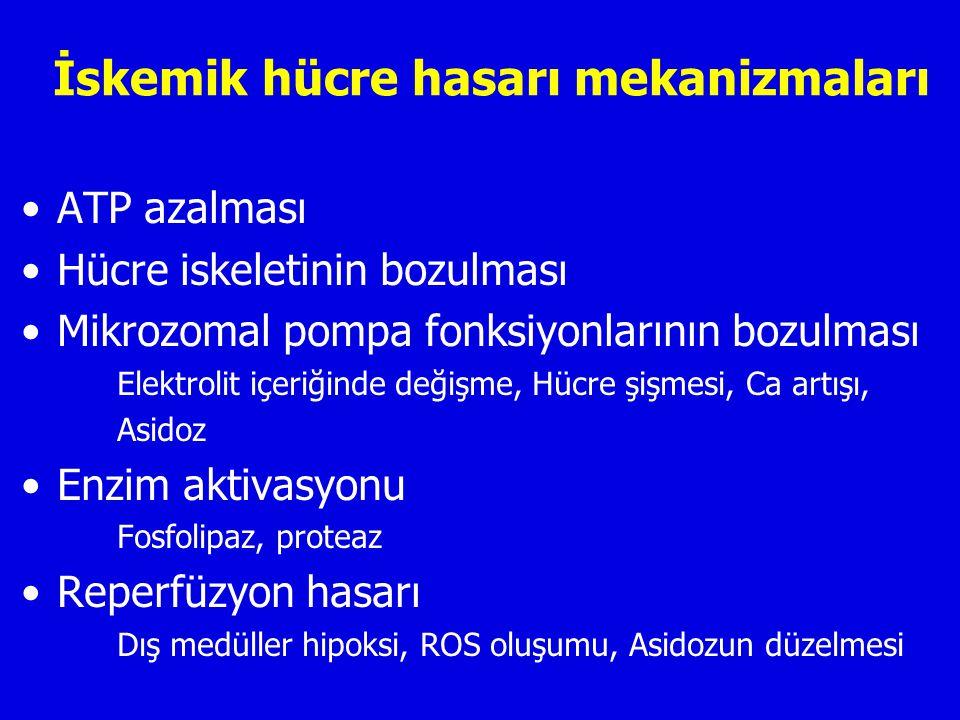 İskemik hücre hasarı mekanizmaları