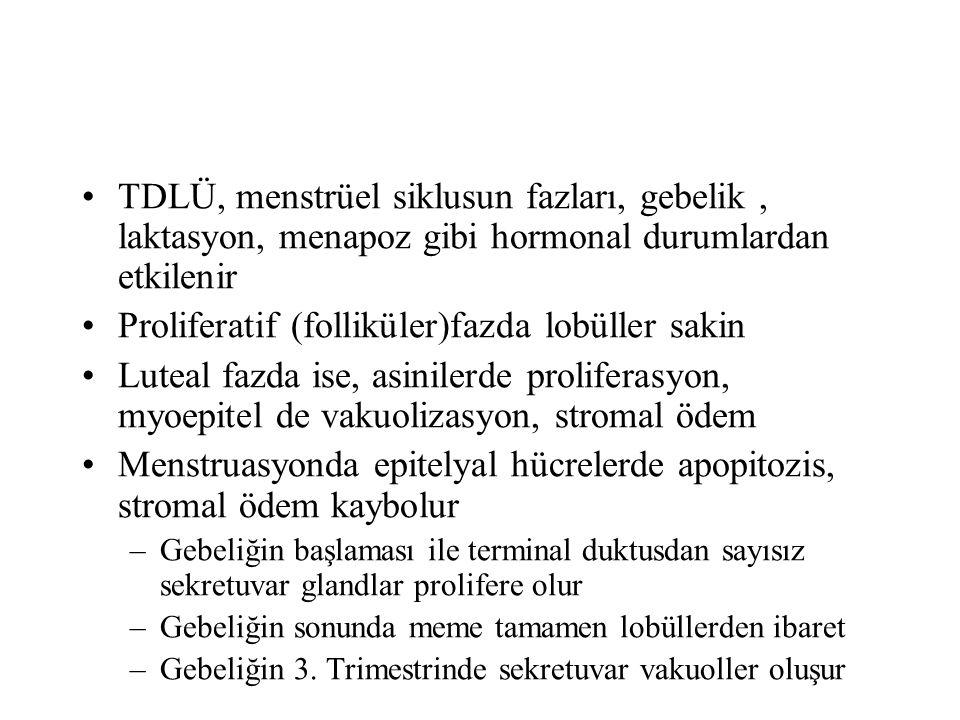 Proliferatif (folliküler)fazda lobüller sakin