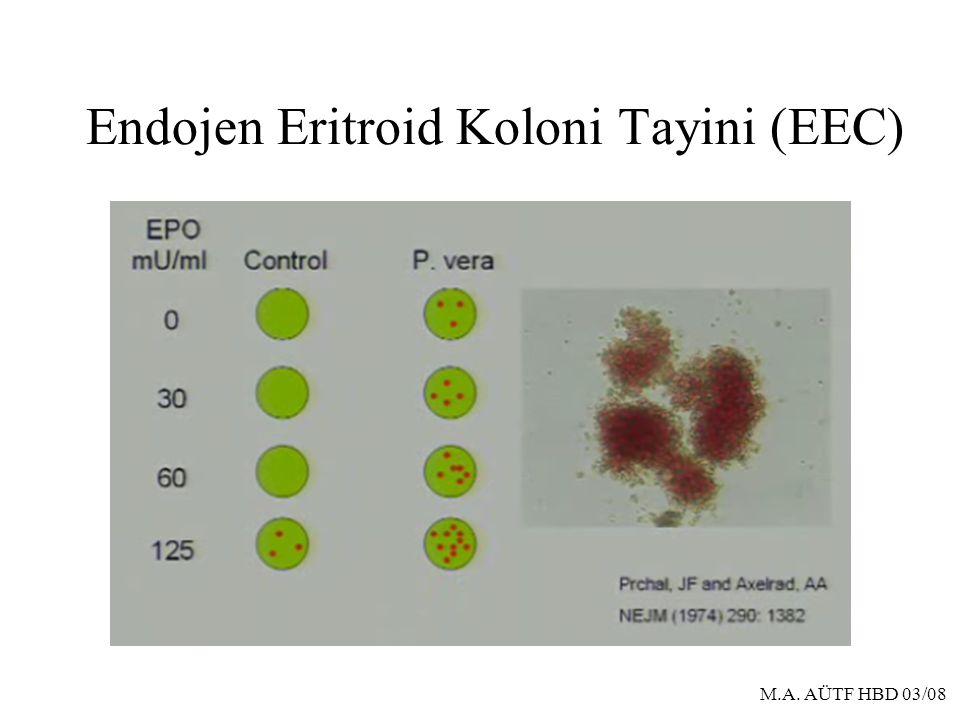 Endojen Eritroid Koloni Tayini (EEC)