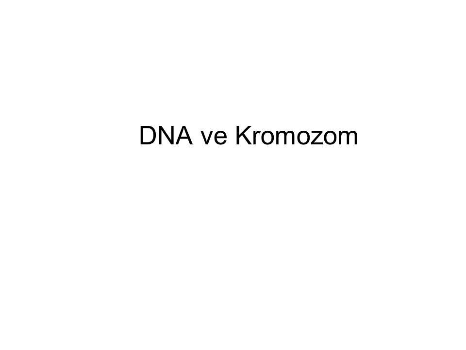 DNA ve Kromozom