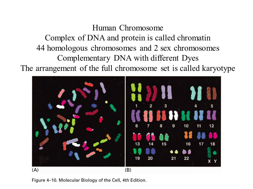 Complex of DNA and protein is called chromatin