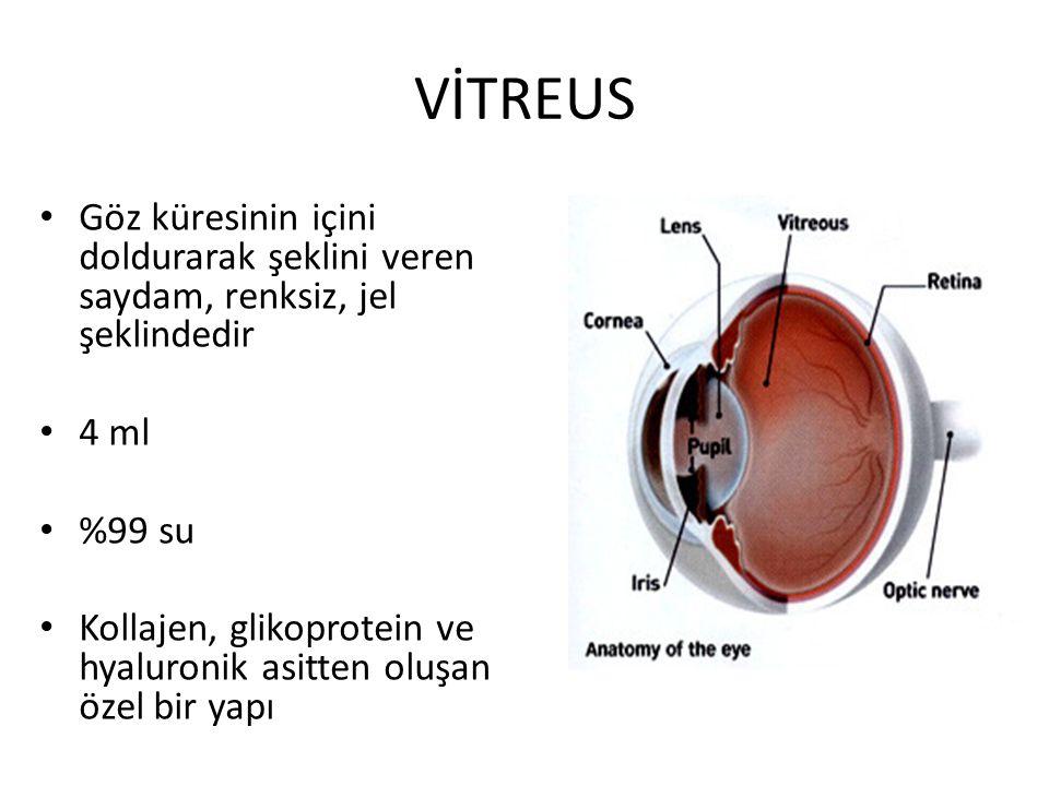 VİTREUS Göz küresinin içini doldurarak şeklini veren saydam, renksiz, jel şeklindedir. 4 ml. %99 su.