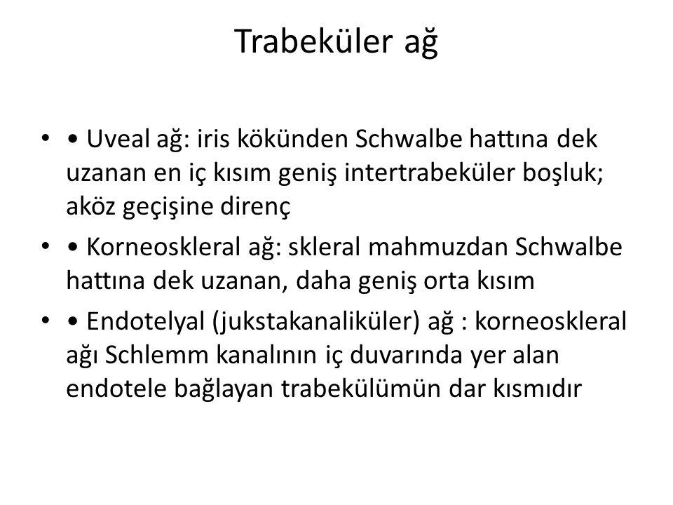 Trabeküler ağ • Uveal ağ: iris kökünden Schwalbe hattına dek uzanan en iç kısım geniş intertrabeküler boşluk; aköz geçişine direnç.