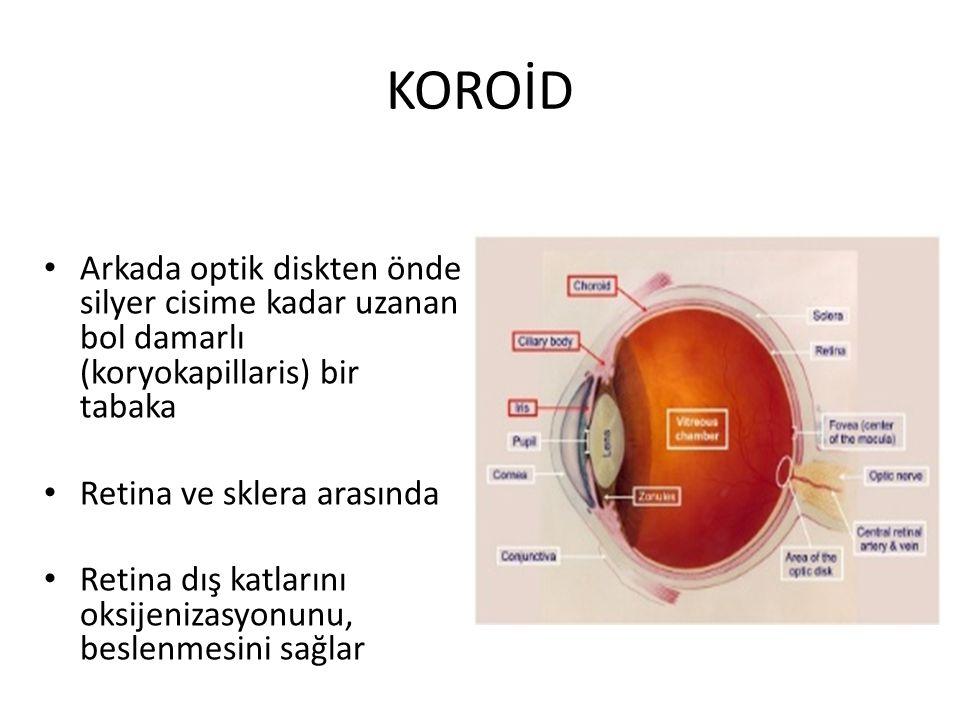 KOROİD Arkada optik diskten önde silyer cisime kadar uzanan bol damarlı (koryokapillaris) bir tabaka.