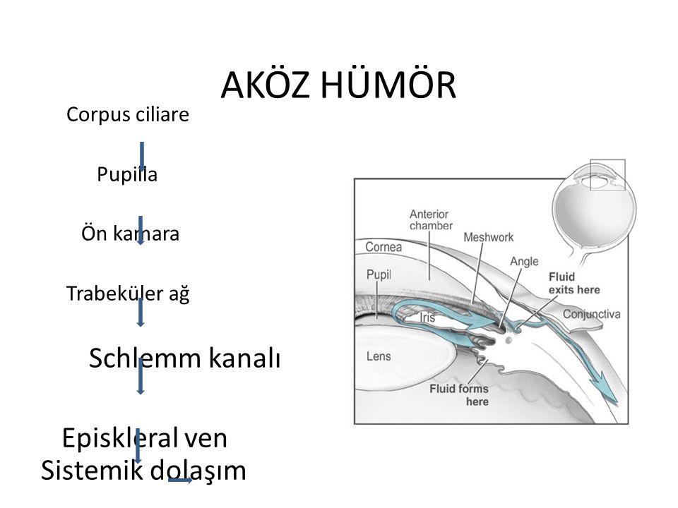 AKÖZ HÜMÖR Schlemm kanalı Episkleral ven Sistemik dolaşım