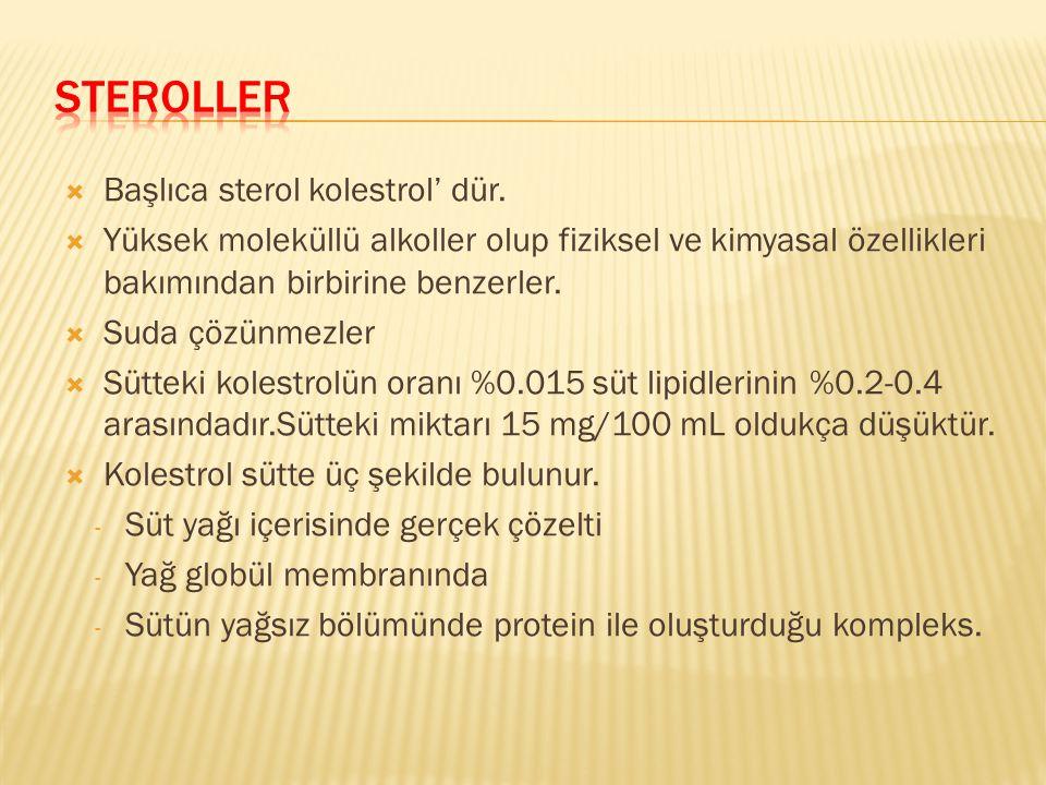 Steroller Başlıca sterol kolestrol' dür.
