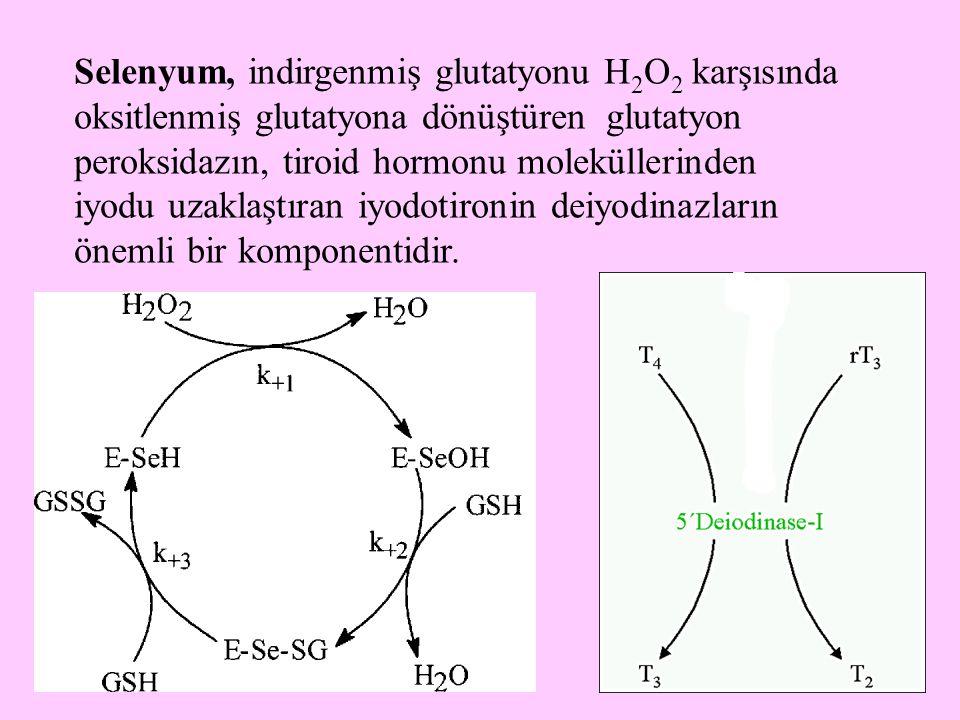 Selenyum, indirgenmiş glutatyonu H2O2 karşısında oksitlenmiş glutatyona dönüştüren glutatyon peroksidazın, tiroid hormonu moleküllerinden iyodu uzaklaştıran iyodotironin deiyodinazların önemli bir komponentidir.