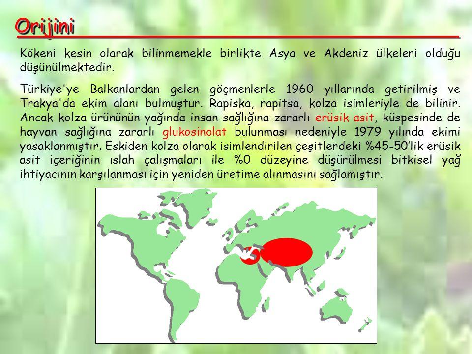 Orijini Kökeni kesin olarak bilinmemekle birlikte Asya ve Akdeniz ülkeleri olduğu düşünülmektedir.