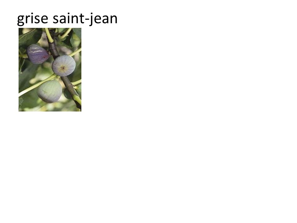 grise saint-jean