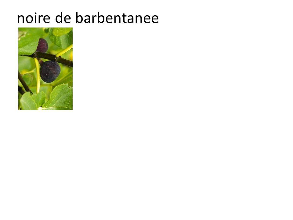 noire de barbentanee