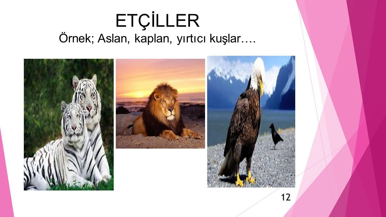 ETÇİLLER Örnek; Aslan, kaplan, yırtıcı kuşlar….