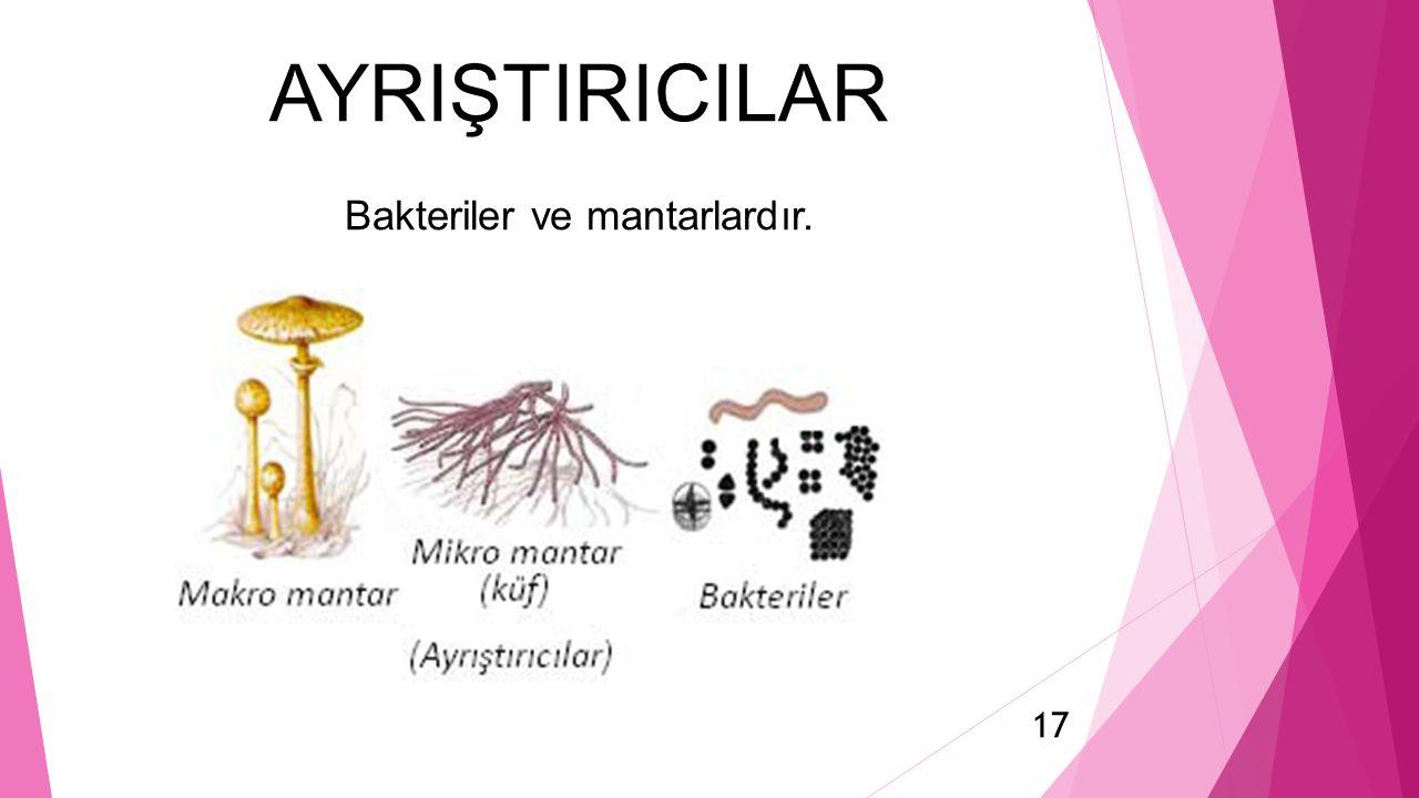 AYRIŞTIRICILAR Bakteriler ve mantarlardır.