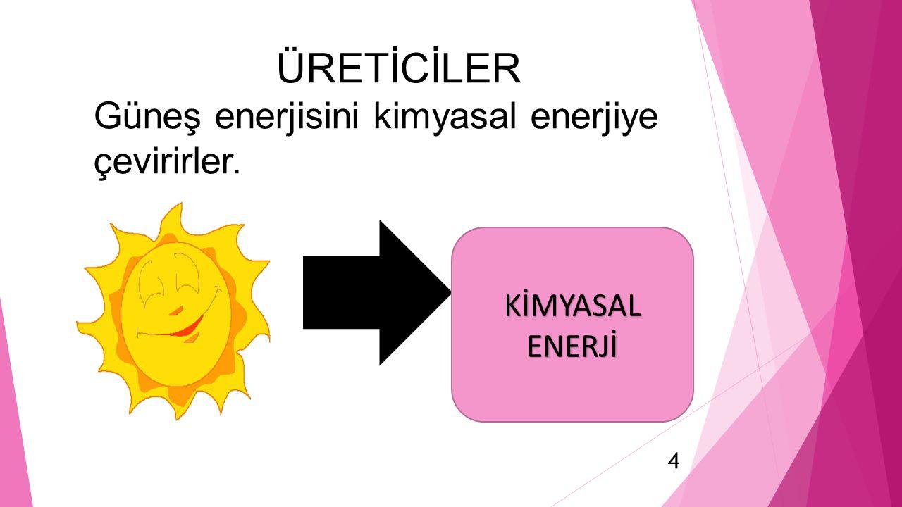 ÜRETİCİLER Güneş enerjisini kimyasal enerjiye çevirirler.