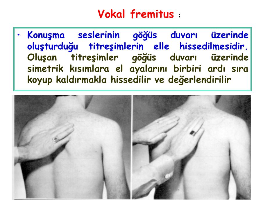 Vokal fremitus :