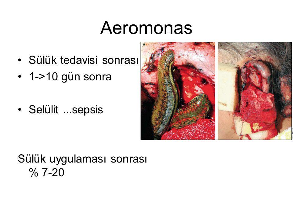 Aeromonas Sülük tedavisi sonrası 1->10 gün sonra Selülit ...sepsis