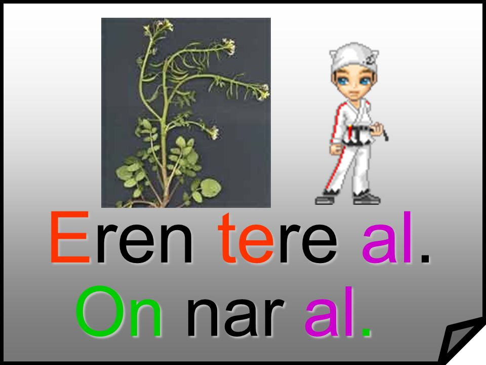 Eren tere al. On nar al.