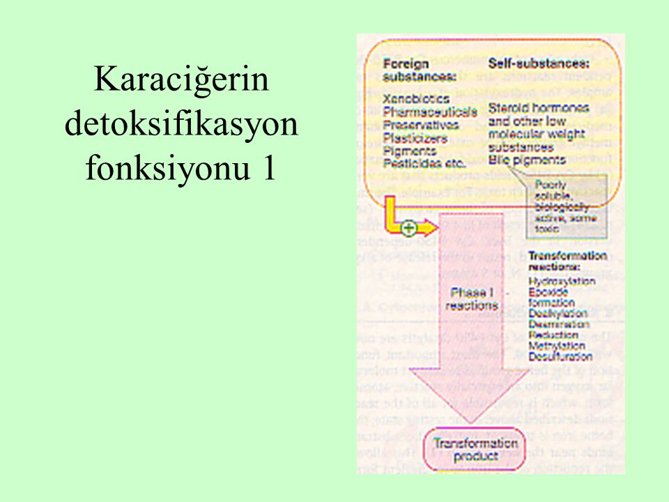 Karaciğerin detoksifikasyon fonksiyonu 1