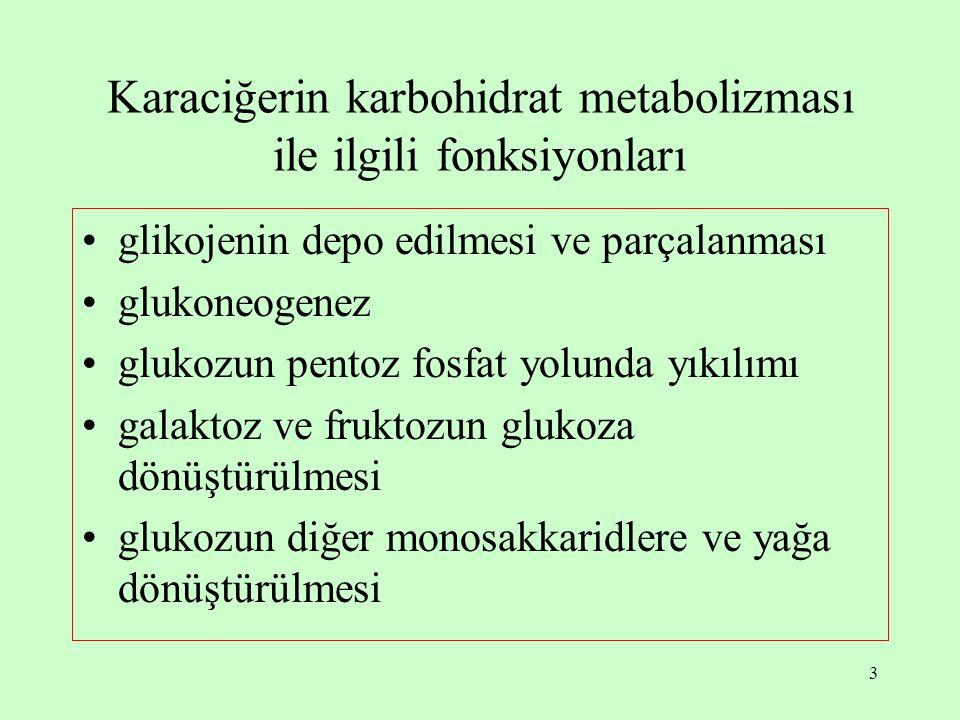 Karaciğerin karbohidrat metabolizması ile ilgili fonksiyonları