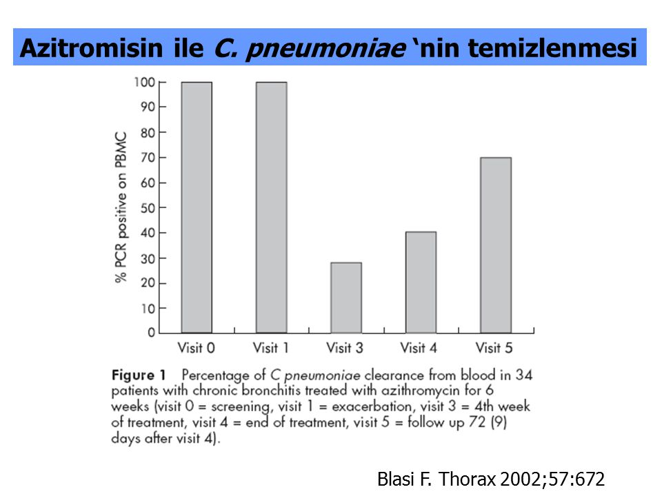 Azitromisin ile C. pneumoniae 'nin temizlenmesi