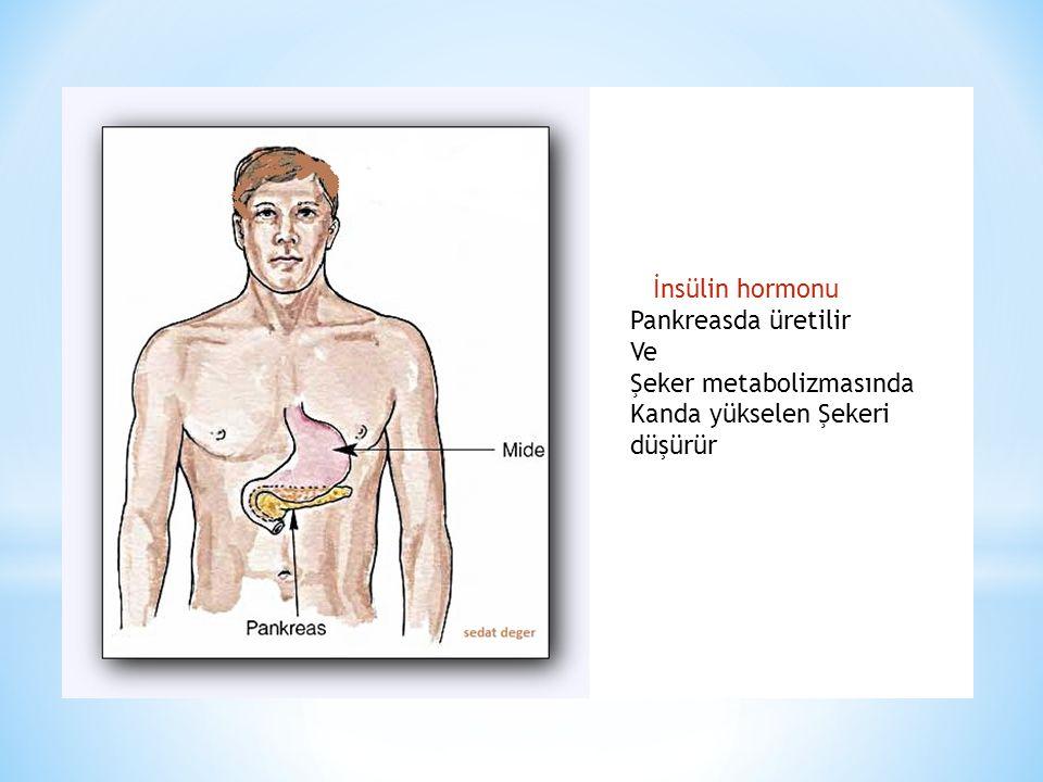 İnsülin hormonu Pankreasda üretilir Ve Şeker metabolizmasında Kanda yükselen Şekeri düşürür