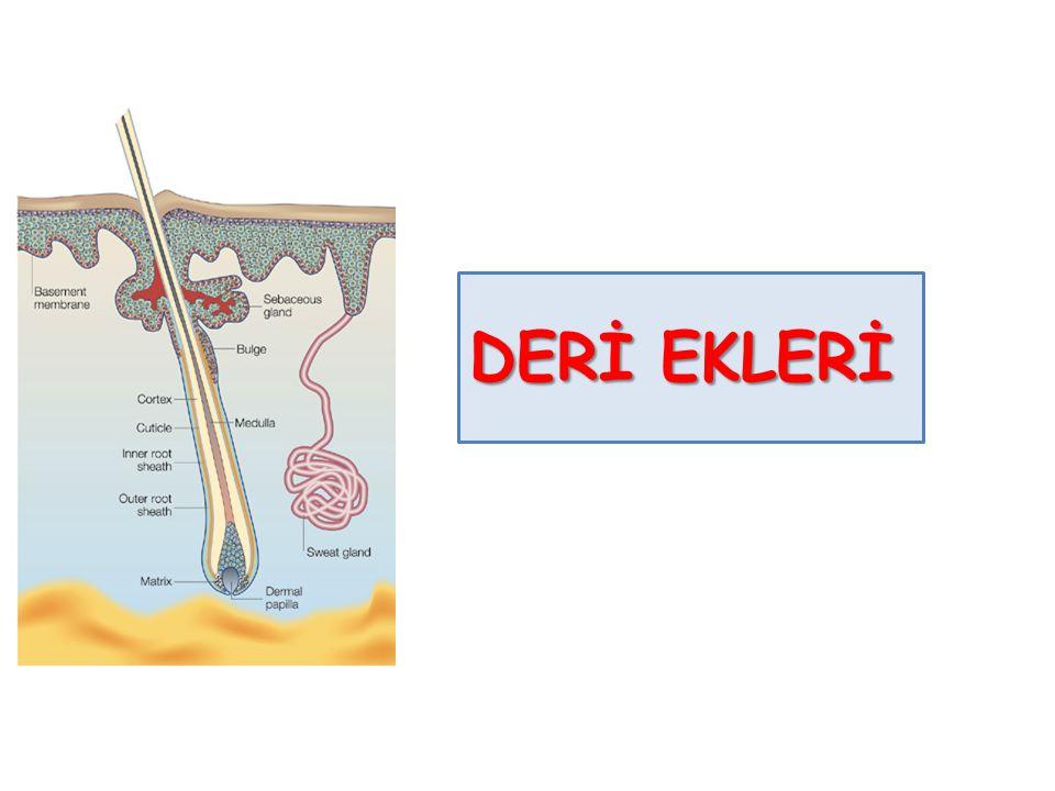 DERİ EKLERİ