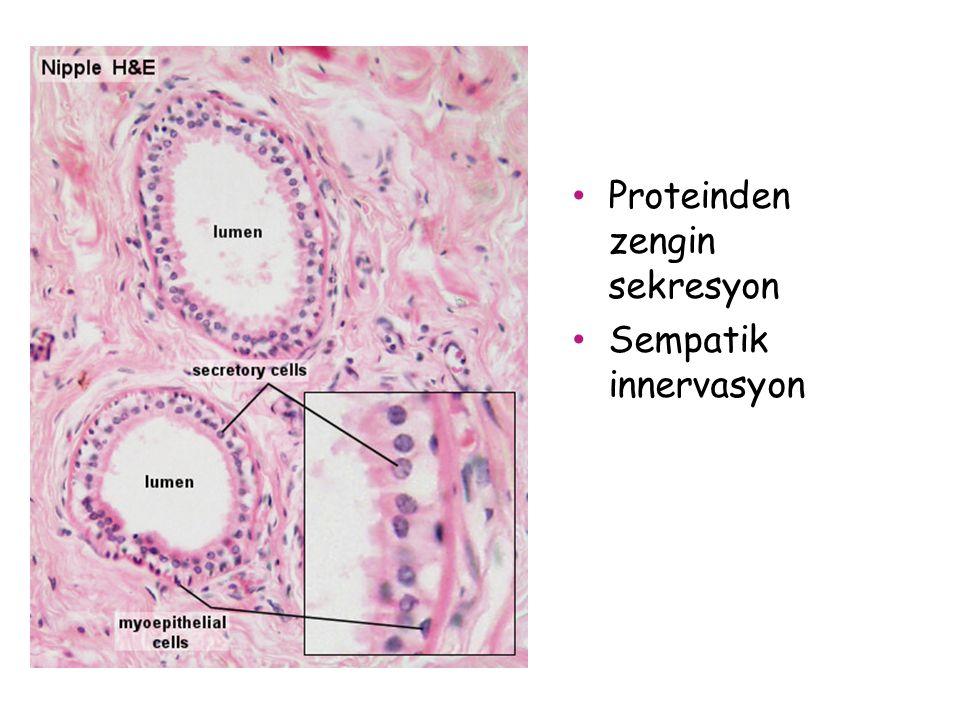 Proteinden zengin sekresyon
