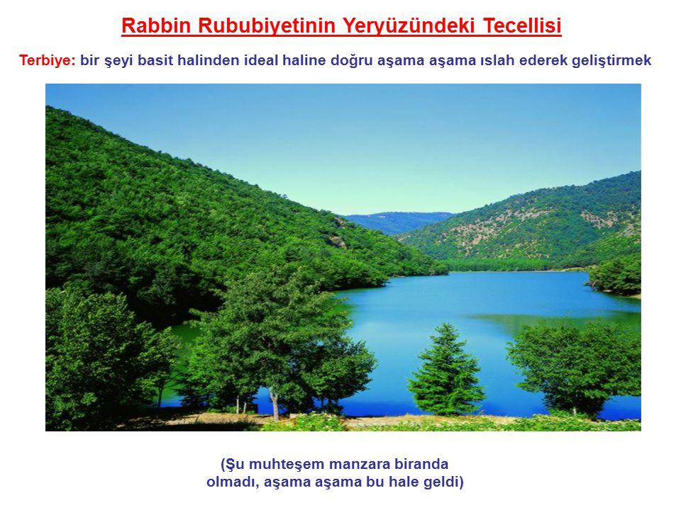 Rabbin Rububiyetinin Yeryüzündeki Tecellisi