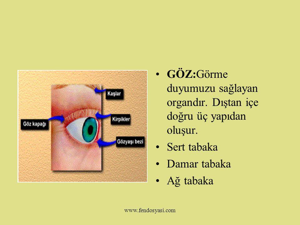 GÖZ:Görme duyumuzu sağlayan organdır