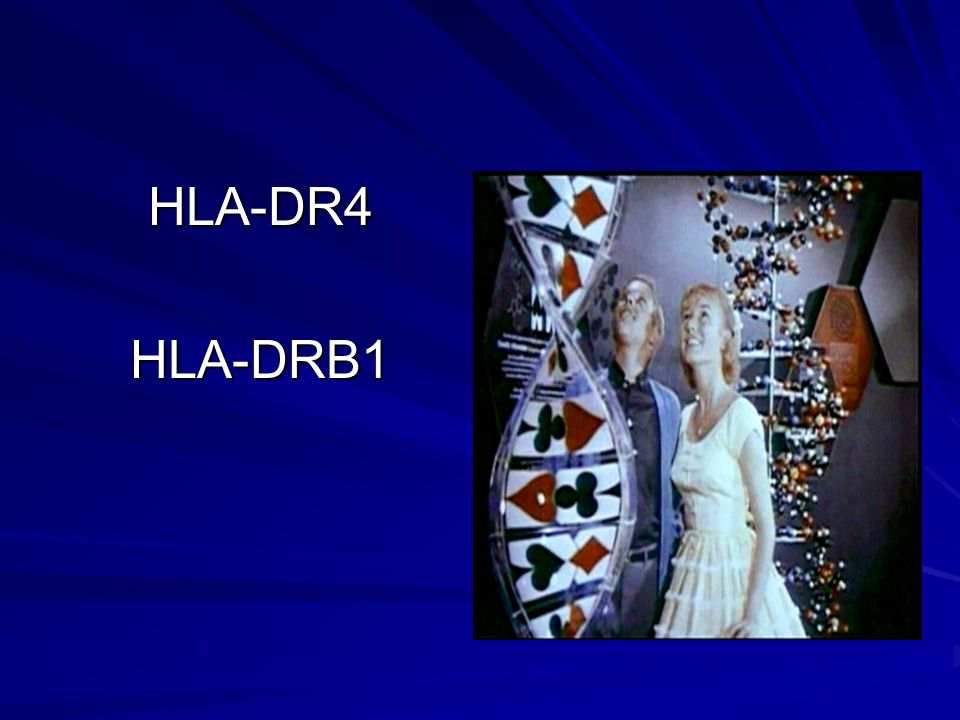 HLA-DR4 HLA-DRB1