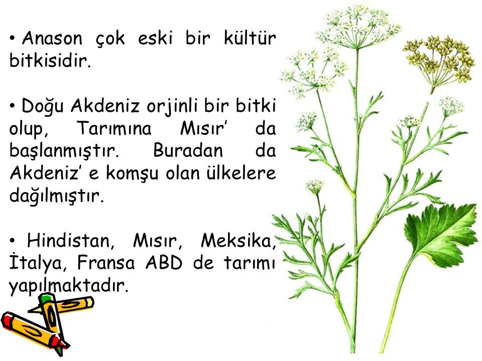 Anason çok eski bir kültür bitkisidir.