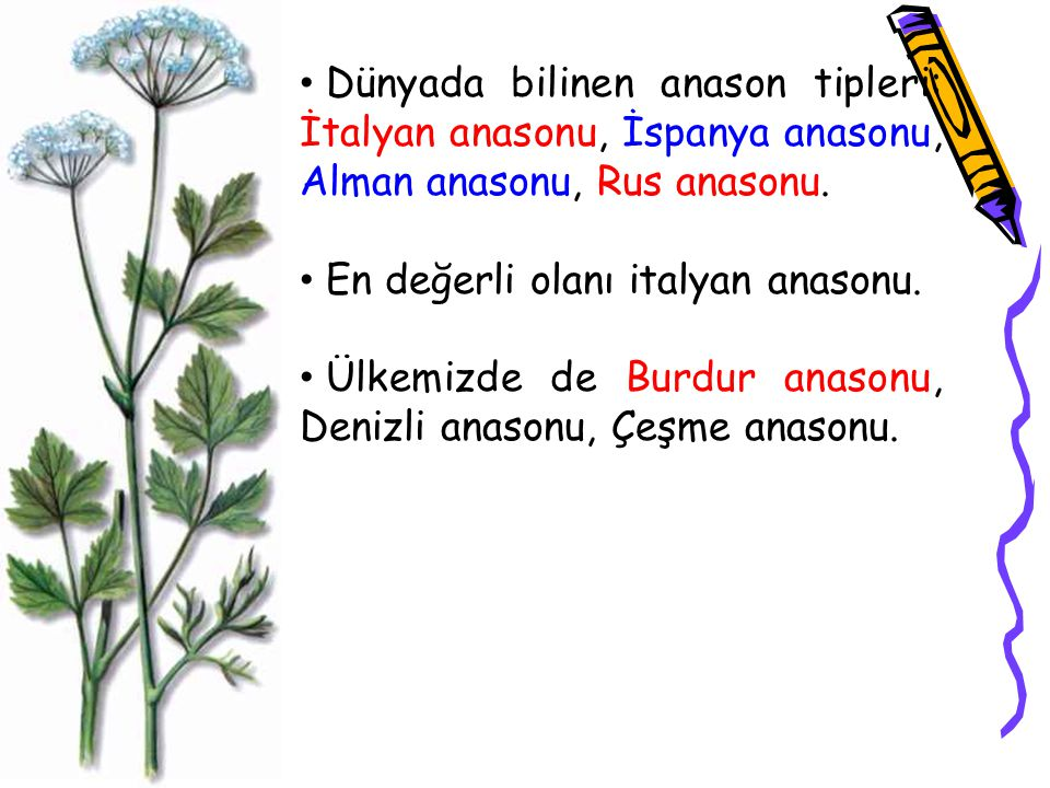 Dünyada bilinen anason tipleri: İtalyan anasonu, İspanya anasonu, Alman anasonu, Rus anasonu.
