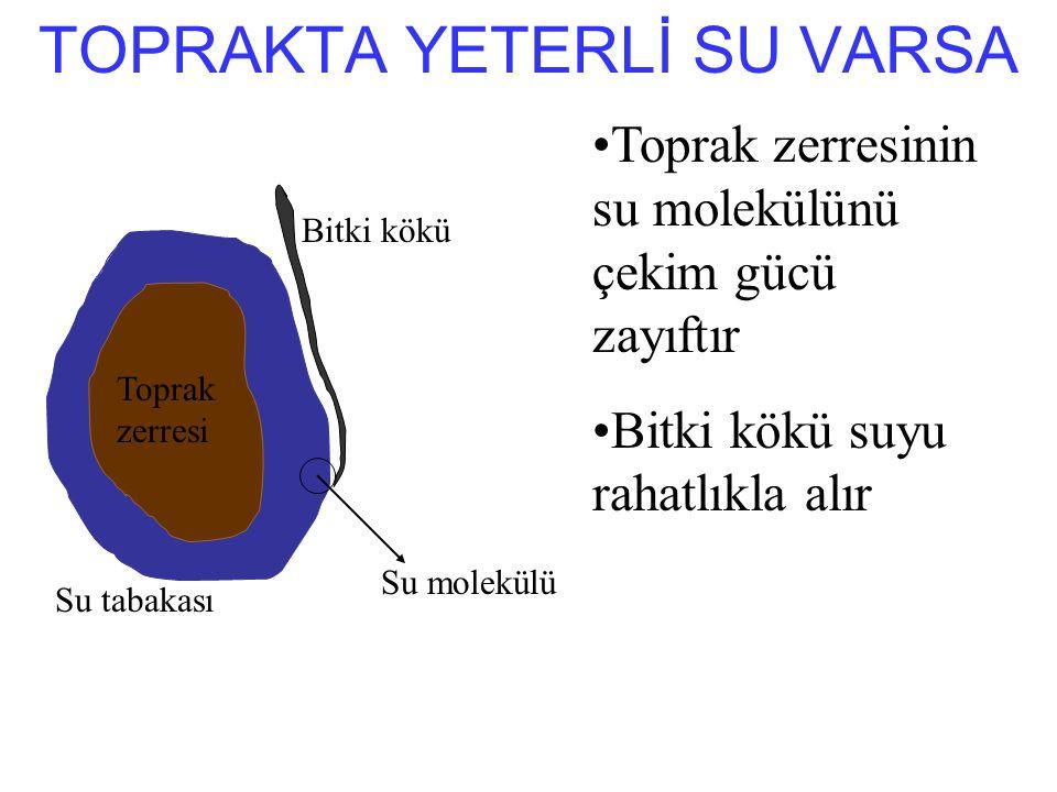 TOPRAKTA YETERLİ SU VARSA
