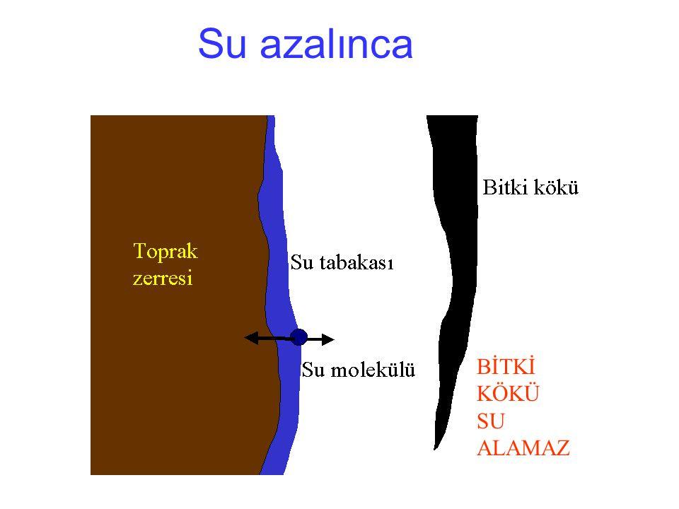 Su azalınca BİTKİ KÖKÜ SU ALAMAZ