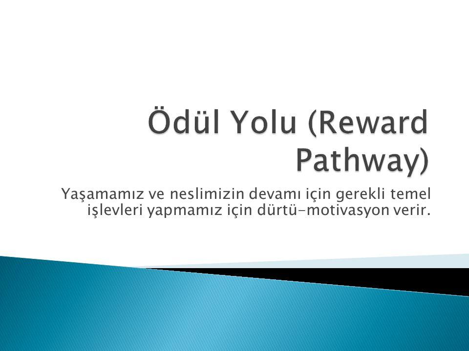 Ödül Yolu (Reward Pathway)