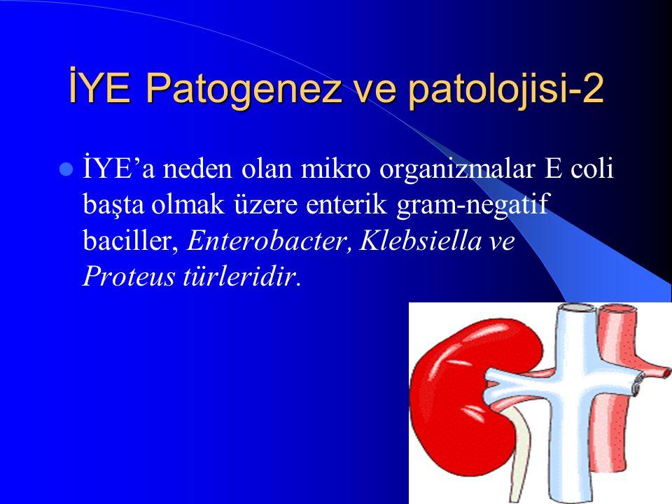 İYE Patogenez ve patolojisi-2