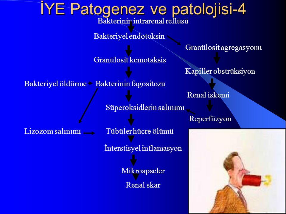 İYE Patogenez ve patolojisi-4