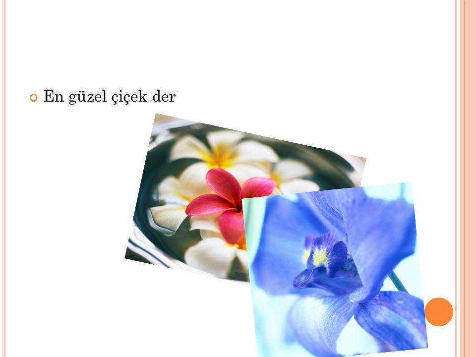 En güzel çiçek der