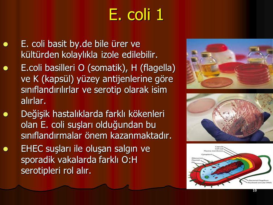 E. coli 1 E. coli basit by.de bile ürer ve kültürden kolaylıkla izole edilebilir.