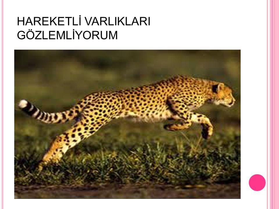 HAREKETLİ VARLIKLARI GÖZLEMLİYORUM
